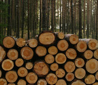 Two photos, one of a forest and a second photo of a pile of cut timber which partially over-lays the forest photo.
